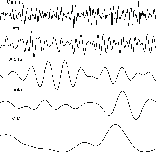 EEG-frequencies
